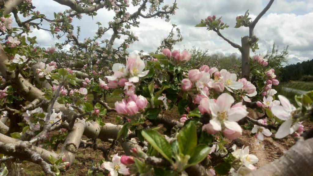 La primavera avanza en el Valle de las Caderechas